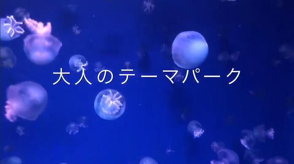 カヨ旅in水族館癒され旅